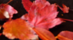 abstract-autumn-small.jpg