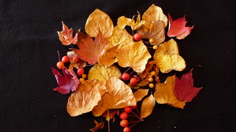 Orange, red and yellow leaves of autumn